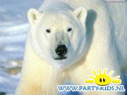 lekker ijsbeerijs
